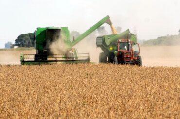 argentina agricoltura campagna grano orzo 2021 2022