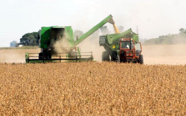Economia argentina, la buona notizia da agricoltura (e export). Campagna record di grano e orzo