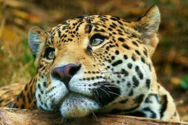 esteros del iberá corrientes ripopolamento giaguaro argentina