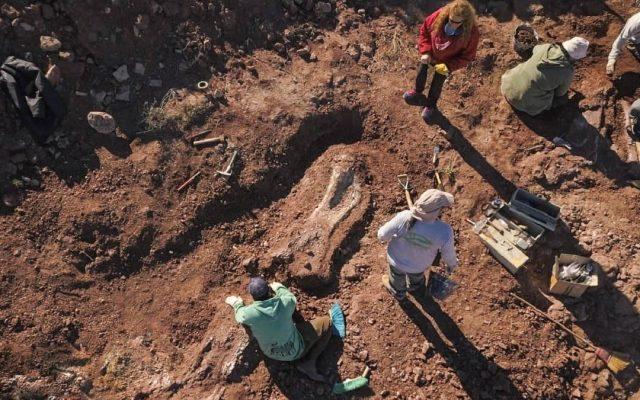 resti dinosauri patagonia argentina villa el chocon neuquen