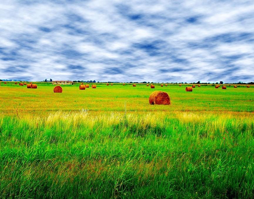 grano argentino