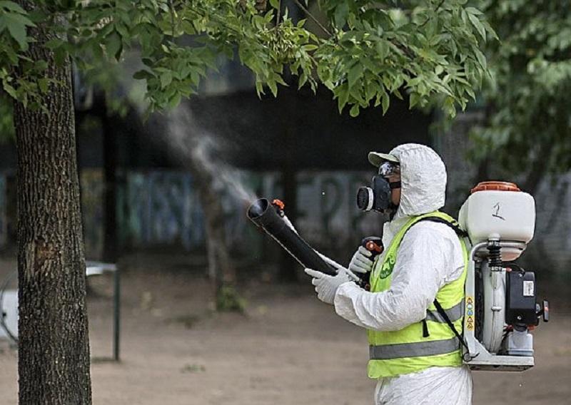 argentina zanzara malattia dengue virus buenos aires