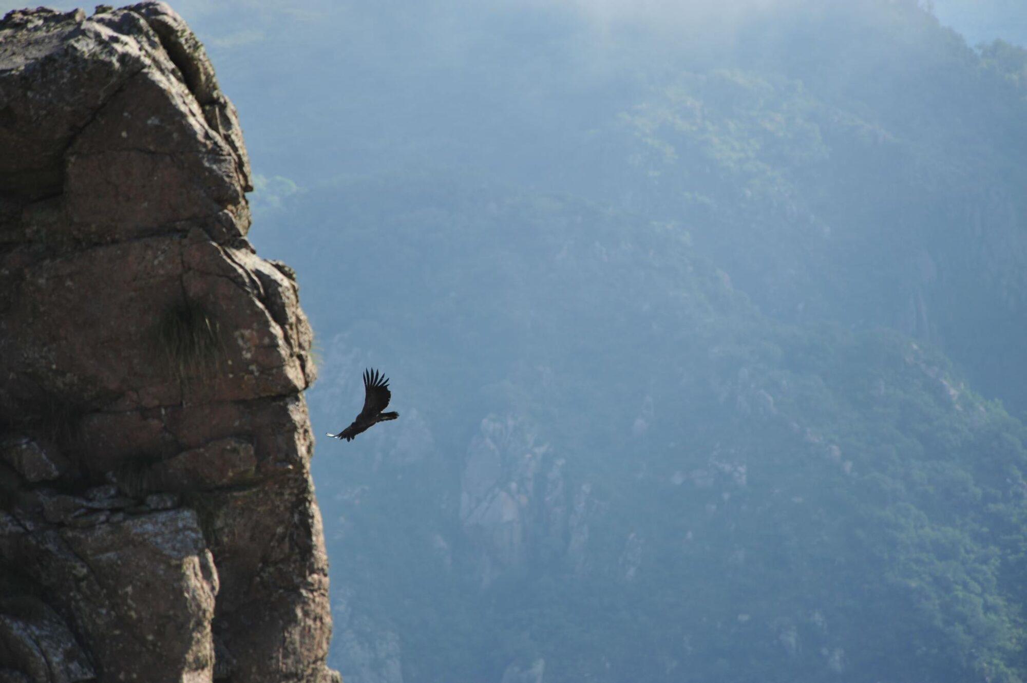quebrada del condor la rioja argentina avvistamento