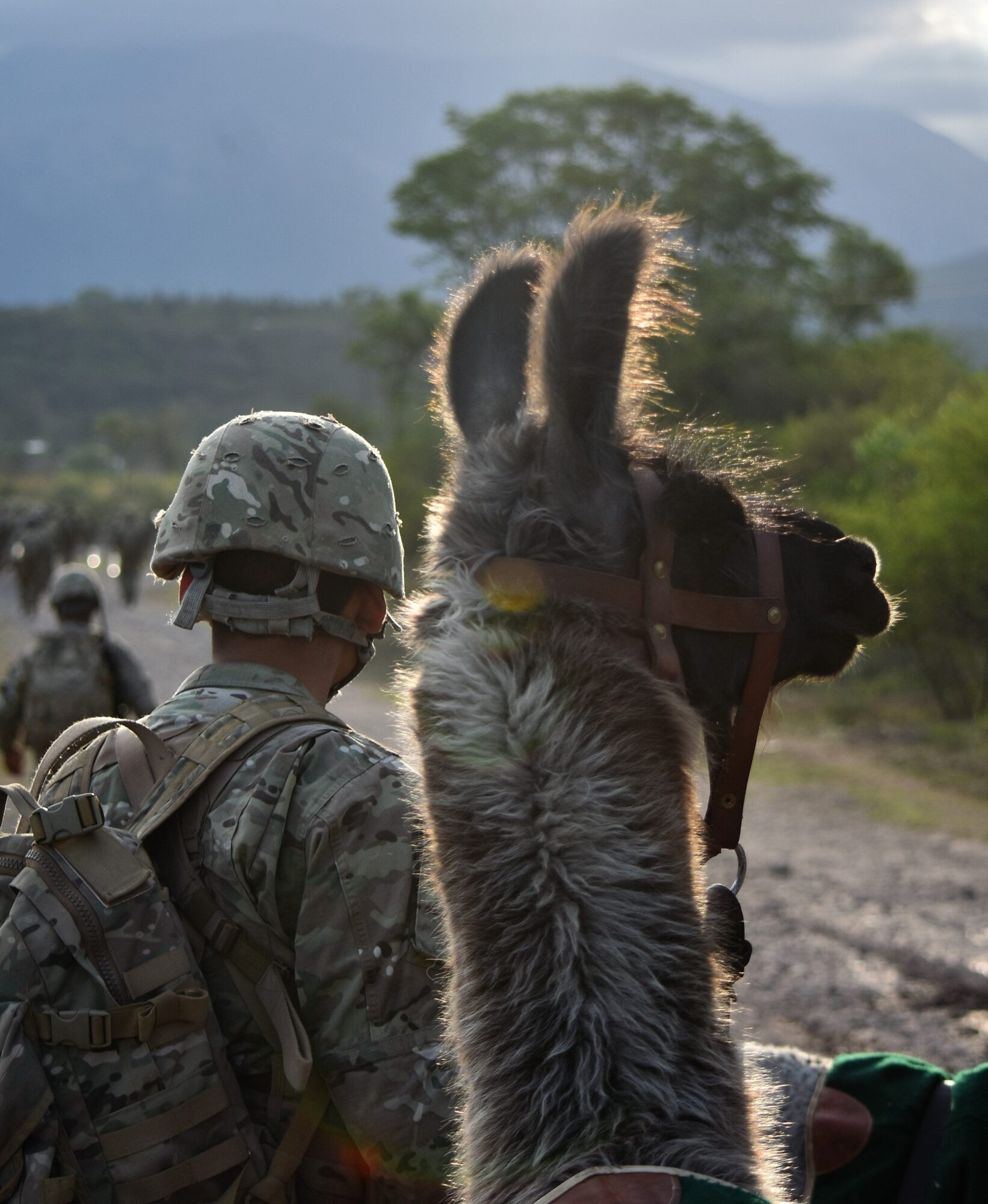 esercito argentino arruolamento lama montagna artiglieria