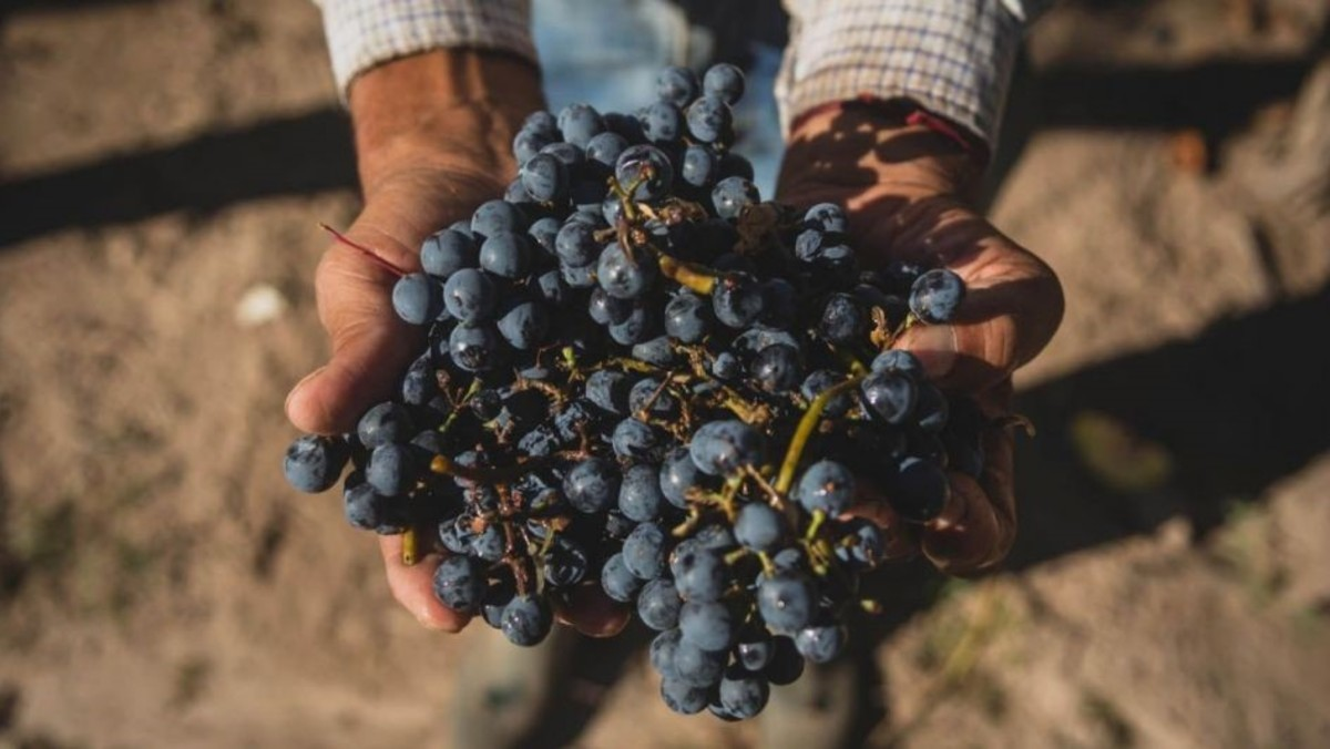 vino argentino dia mundial del malbec argentino 17 aprile