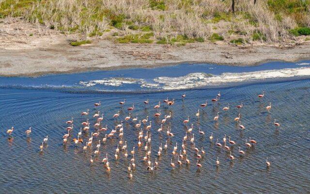parco nazionale ansenuza cordoba mar chiquito argentina