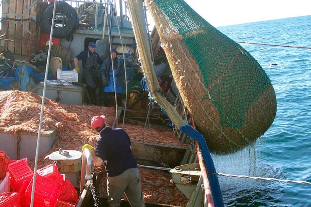 pesca argentina atlantico gamberoni export prezzi