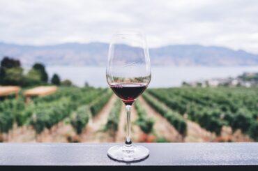 vino argentino migliori vini argentini 2021 recensioni james suckling